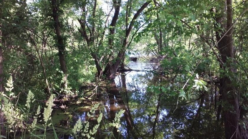 chichaqua_swamp