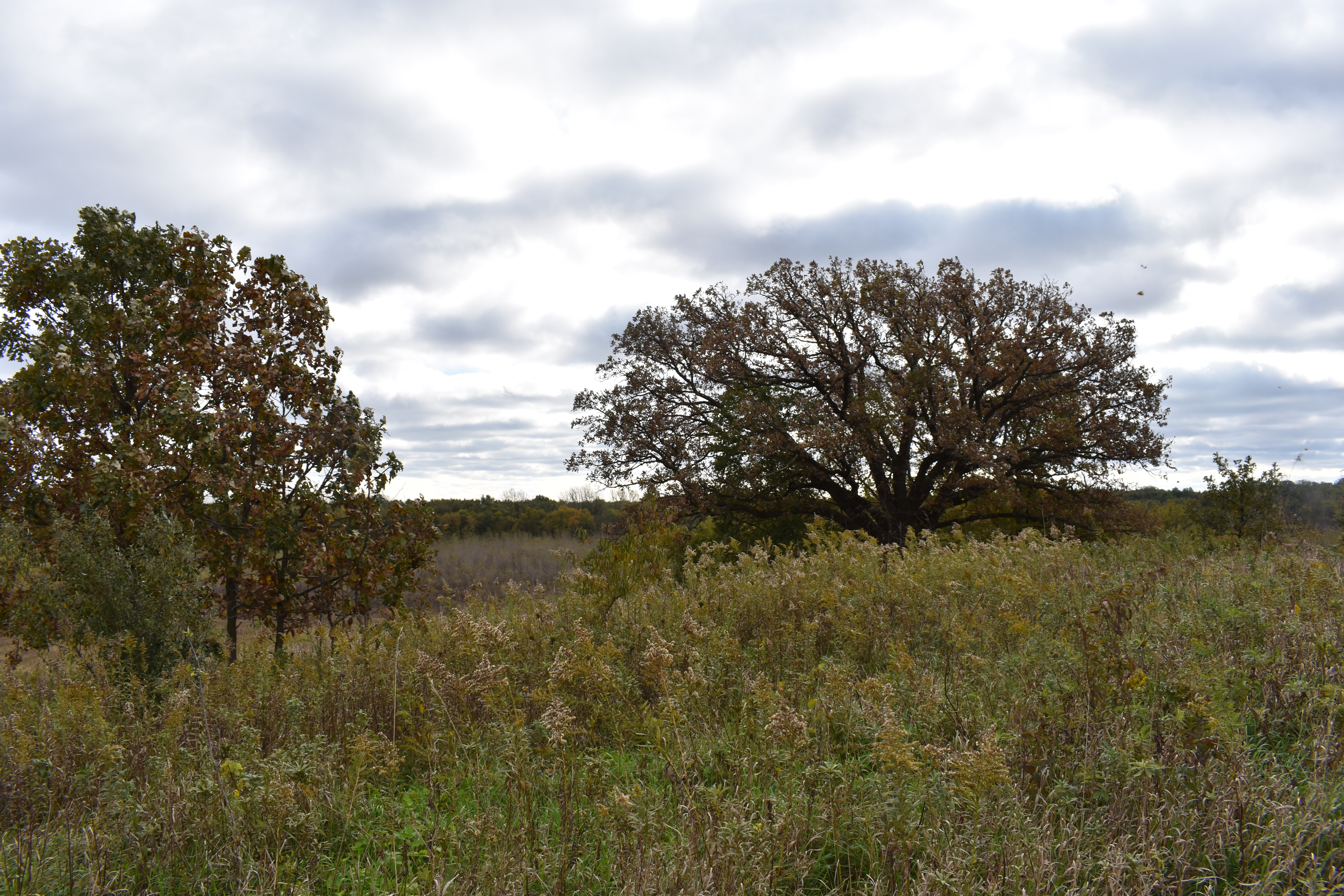 Fall Colors in the Wetland? – 99Wetlands